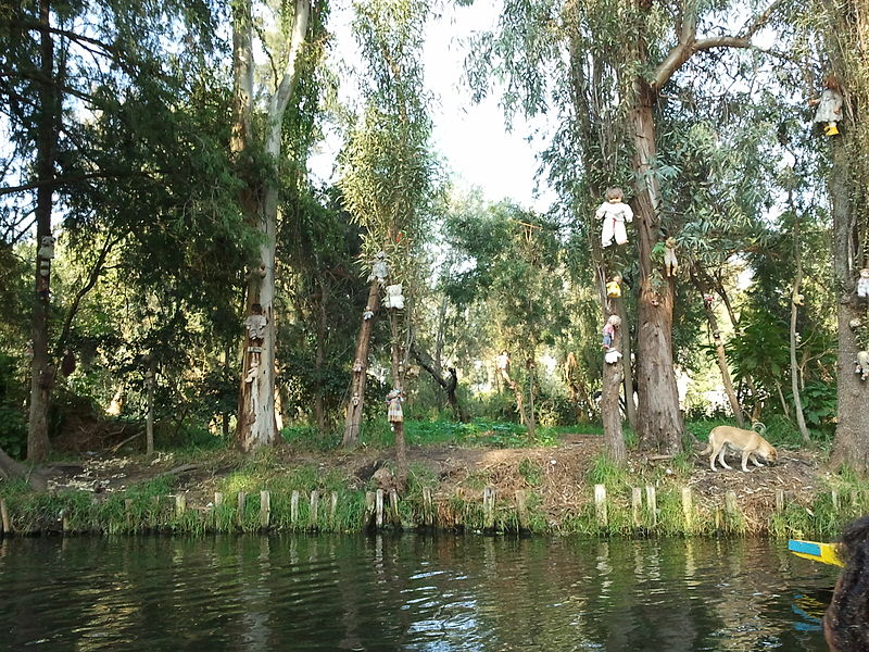 800px-Dolls_hung_in_Santana_Barrera's_chinampa_in_Xochimilco