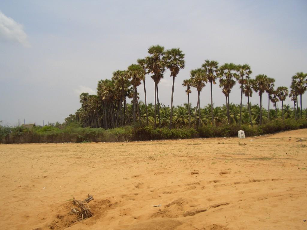 Sat ascuns dupa palmieri