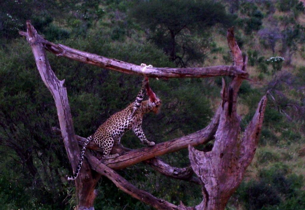 2012 - kenia (156)