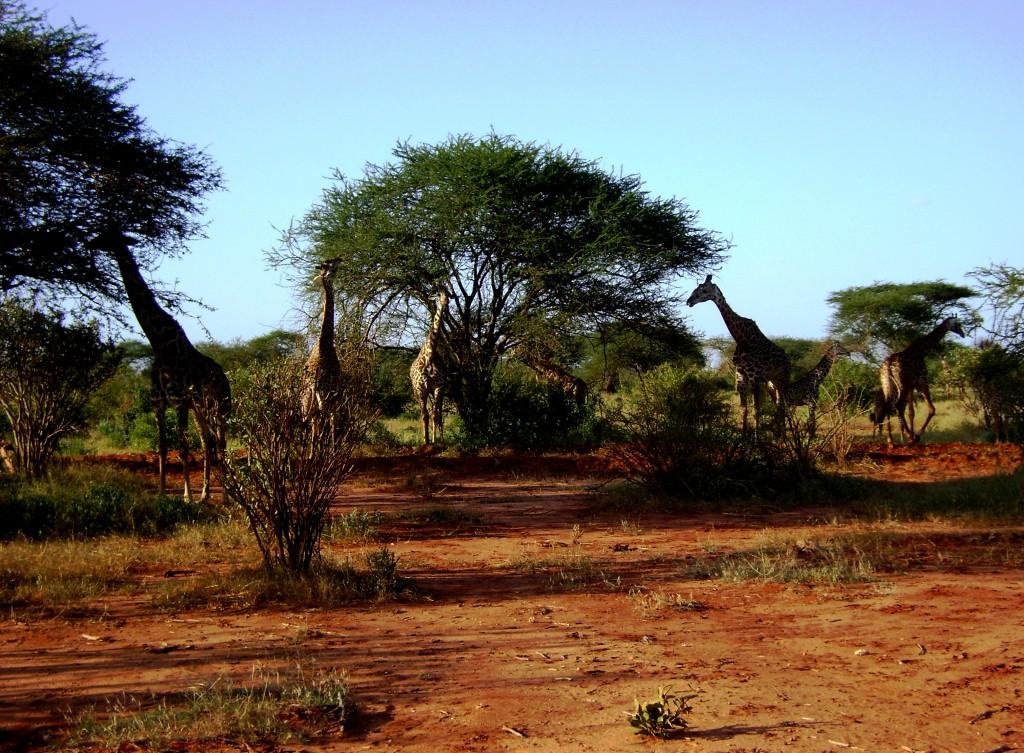 2012 - kenia (97)