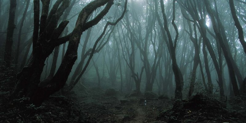 sea_of_trees_5
