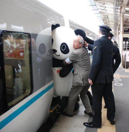 pandapush